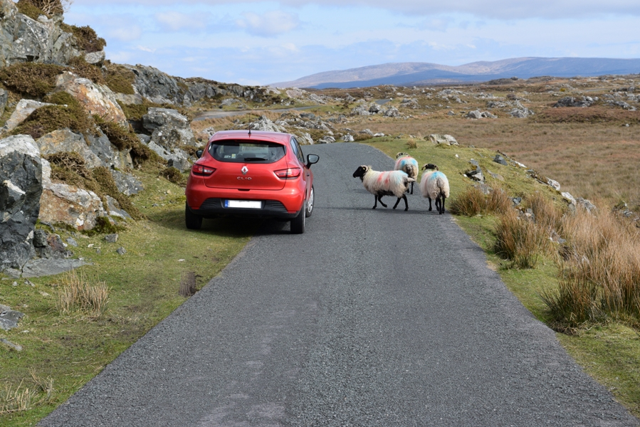How much does one week roadtrip in Ireland cost? | The Cheerful Wanderer