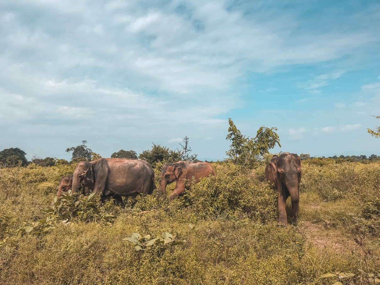 How expensive is Sri Lanka?   The Cheerful Wanderer